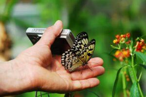 Kompaktkamera - die gebräuchlichste Digitalkamera kaufen