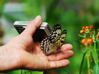 Kompaktkamera - die gebräuchlichste Kamera