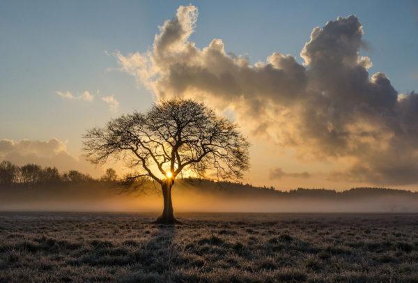 Einsamer Baum Landschaftsfotografie