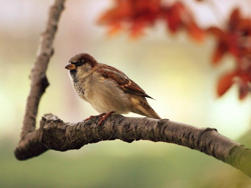 spatz vogel zweig sitzend tier